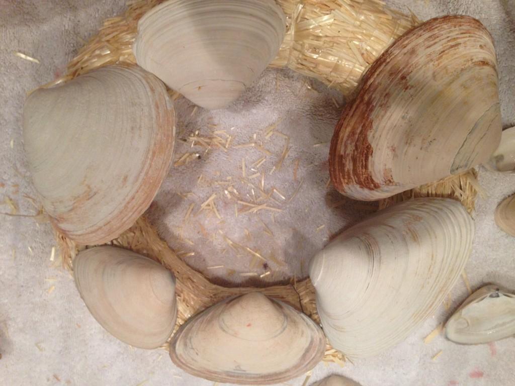 Clam shell Wreath