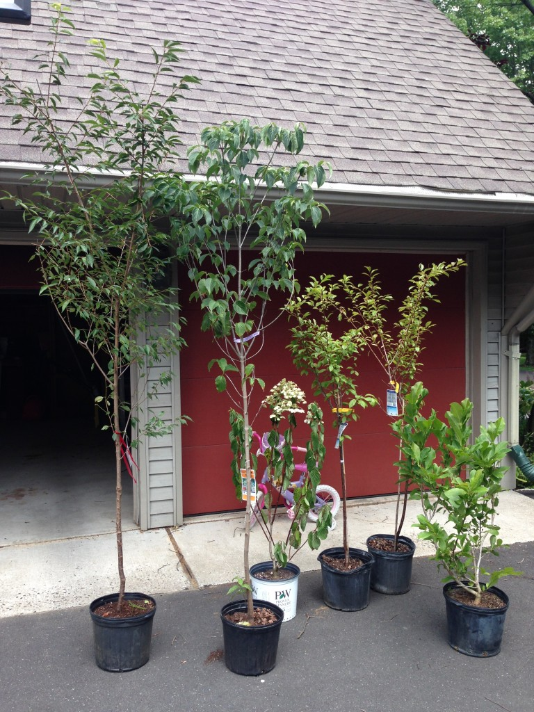 Gardenting on a budget - free or discounted trees and plants - lehmanlane.net