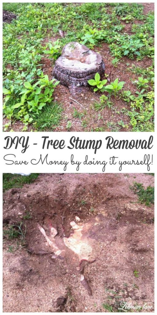 If you have stumps scattered throughout your yard you might want to try grinding them yourself! Stop by to see how we removed the stumps from our yard and saved money #gardening #diy #budget gardening http://lehmanlane.net
