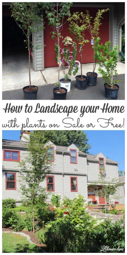 Landscaping your yard can be expensive!  Stop by to see my tips for how I landscaped our home with trees and plants for free or discounted!  #gardening #freetrees http://lehmanlane.net
