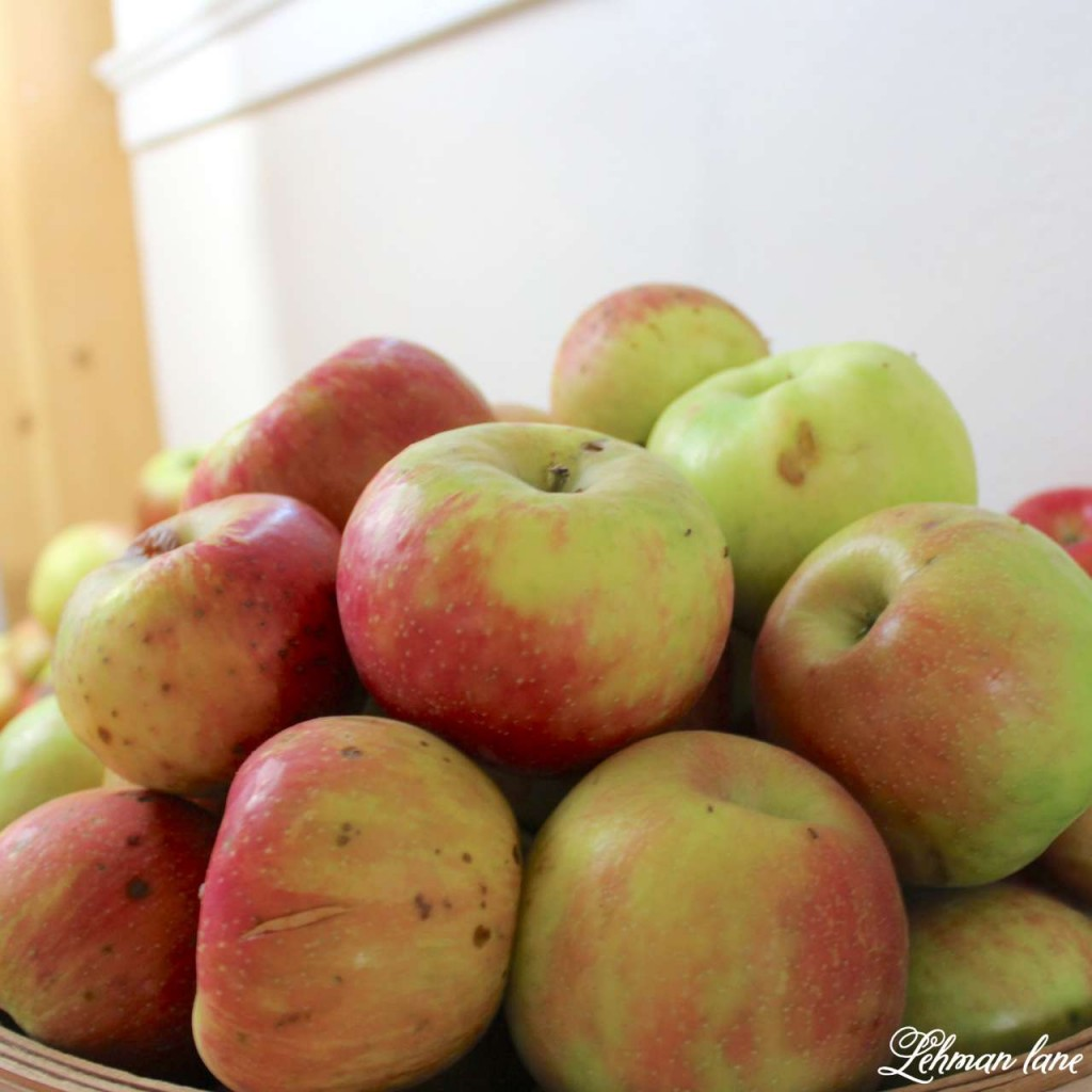 homemade applesauce recipe -bushel of apples