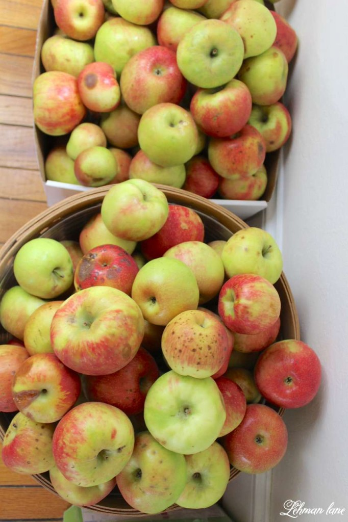 homemade applesauce recipe - bushels of apple seconds