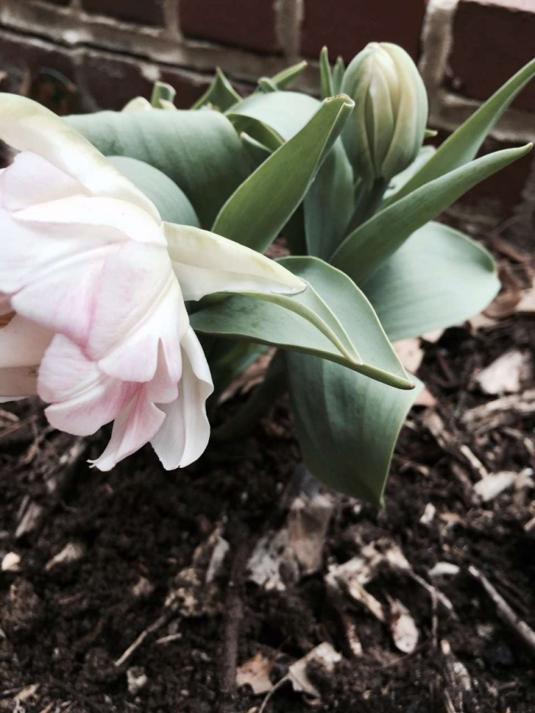 7 Things to Get My Garden Ready for Spring