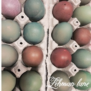 The Days I tried to dye eggs naturally