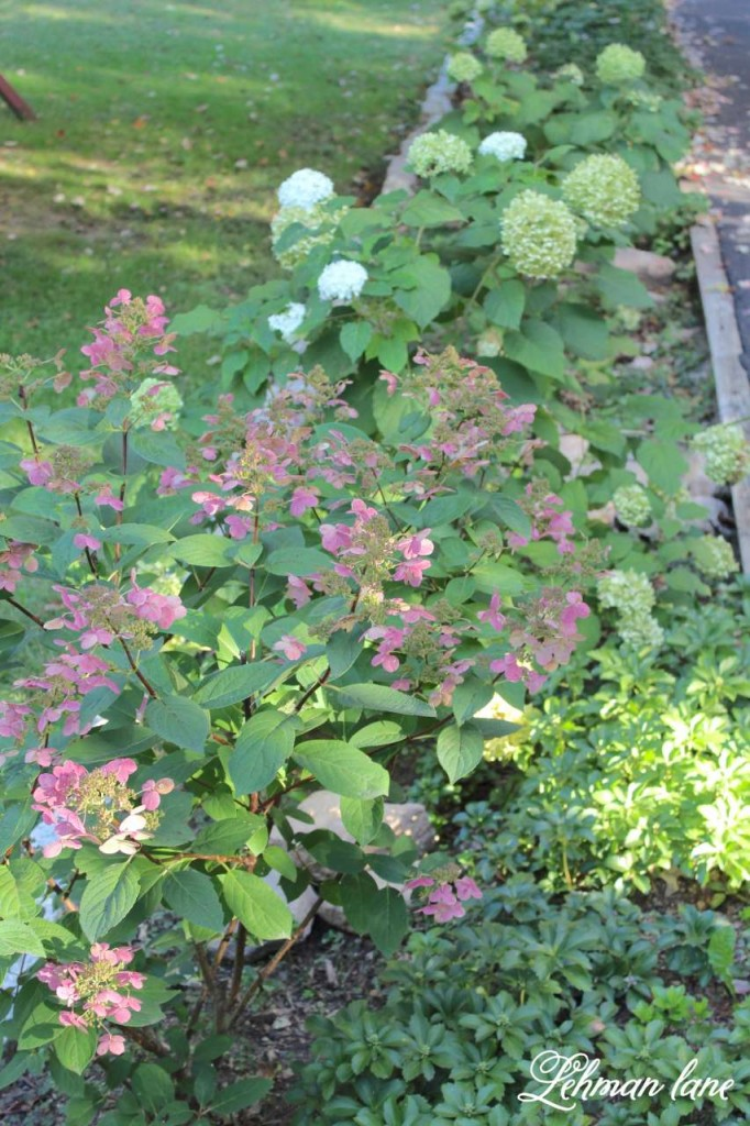 Fall home tour / hydrangea border