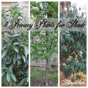 3 Privacy Plants for Shade