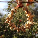 12 Days of Christmas Blog Hop - Simple Peanut Ornament for the Birds