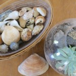 Shells make the prfect summer decorating accessory, especially in the summer! Come see how I use them to decorate our farmhouse! farmhouse summer tour coffee table shells