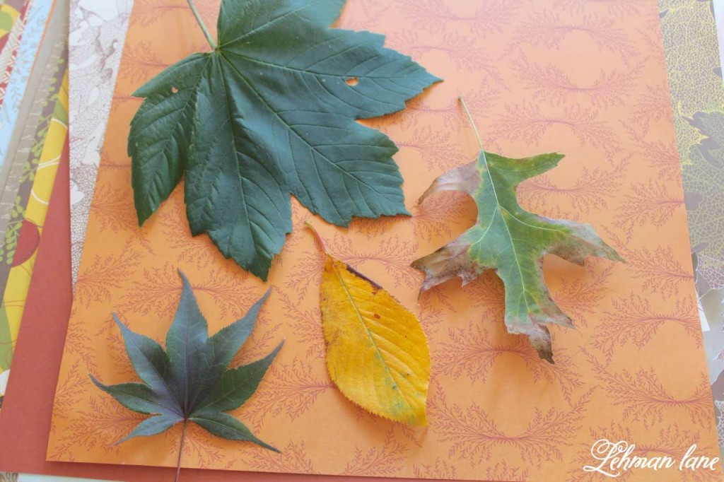 Fall leaves on Cardstock