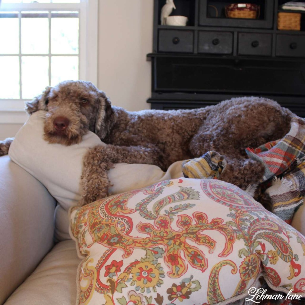 Stop by to see how we decorate our farmhouse for fall - moose our labradoodle