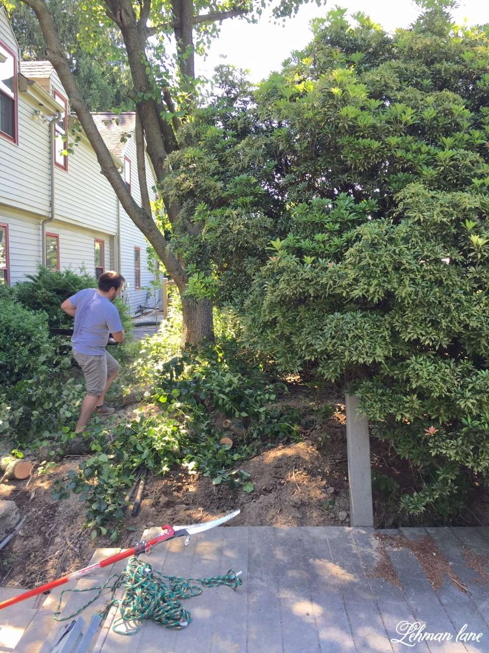 Taking down the shrubs along the back walkway