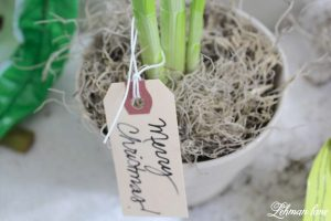 Paperwhites Christmas DIY Teacher Blog Hop
