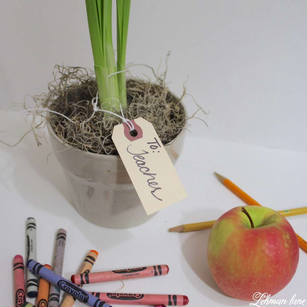 Paperwhites Christmas DIY Teacher Blog Hop