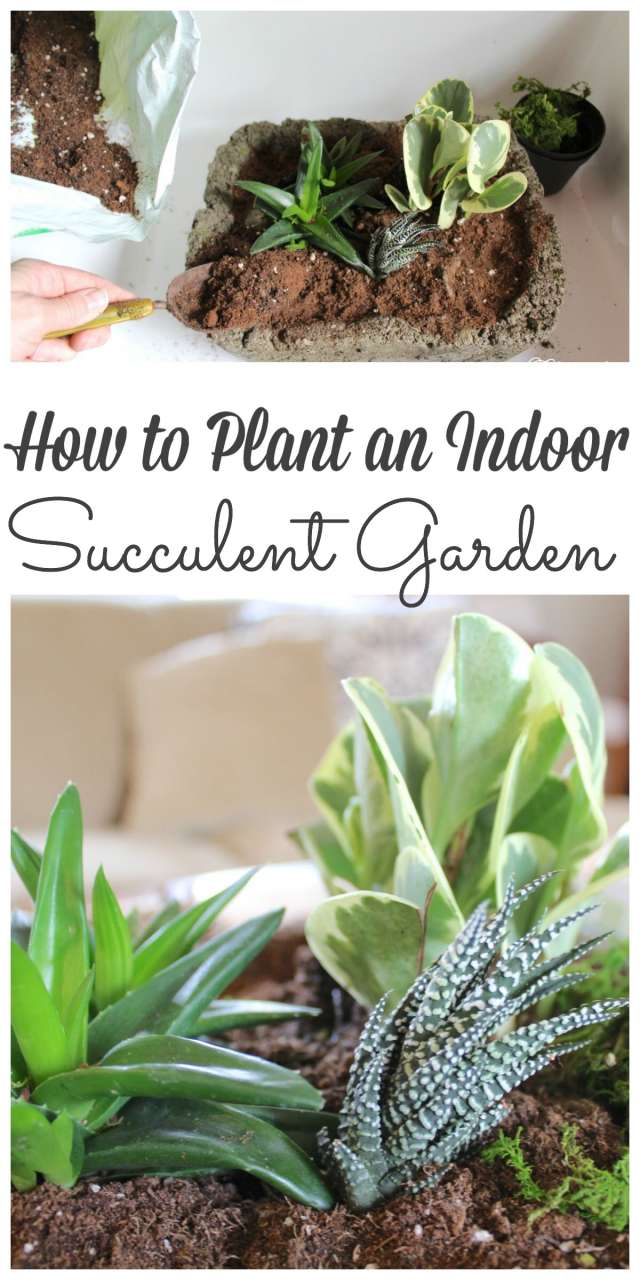 Planting an indoor succulent garden couldn't be easier to create and brightens up the darkest spot of a home #gardening #suculents http://lehmanlane.net