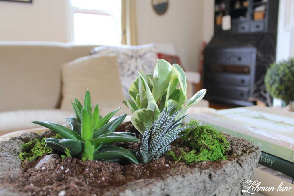 Indoor Succulent Garden - on coffee table in the living room