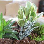 Indoor Succulent Garden - in a concrete planter