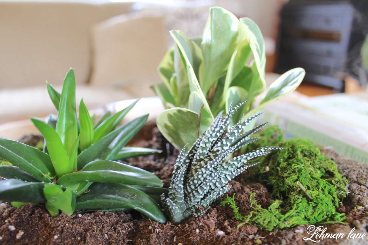 Indoor Succulent Garden - in a concrete planter