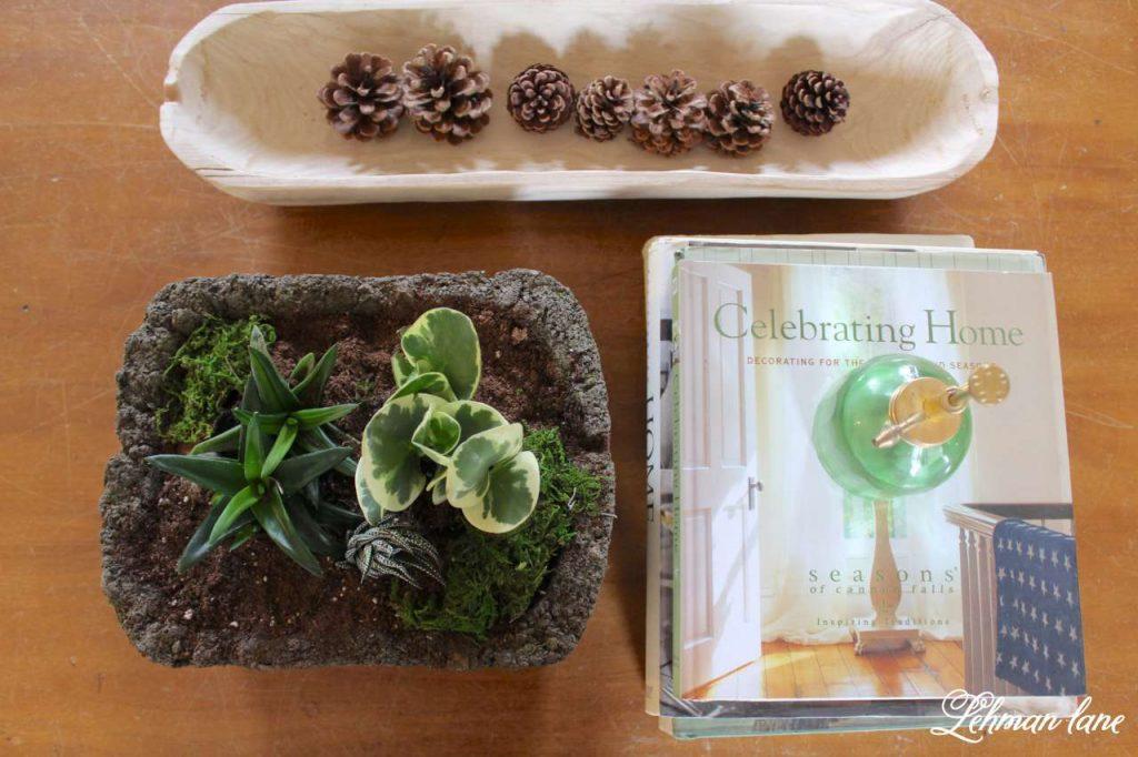 Indoor Succulent Garden - on coffee table