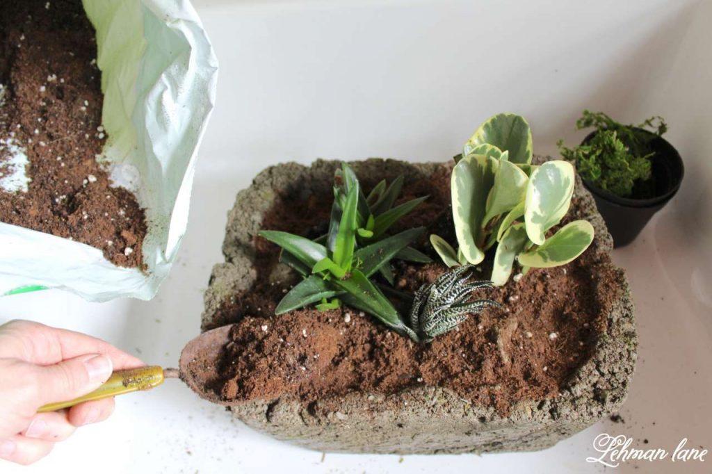 Indoor Succulent Garden - adding potting soil