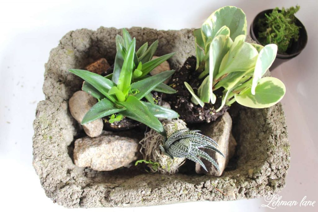 Indoor Succulent Garden - rocks to keep them in place