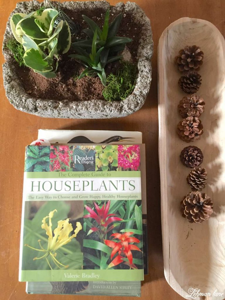 Magnificent Caring For Houseplants 3 Tips For Success Lehman Lane Interior Design Ideas Clesiryabchikinfo