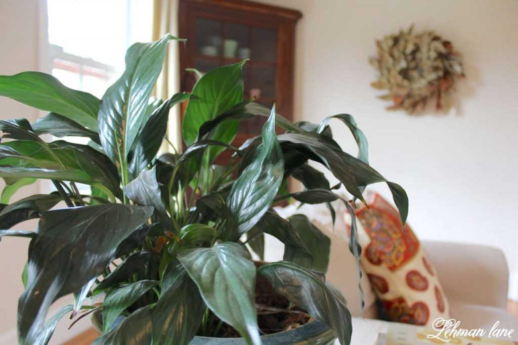 Caring for Houseplants - 3 Tips for Success