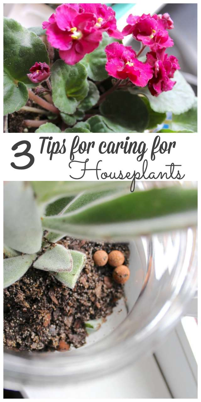 Caring for houseplants is not hard to do. sharing my 3 tips on how to be successful! #gardening http://lehmanlane.net