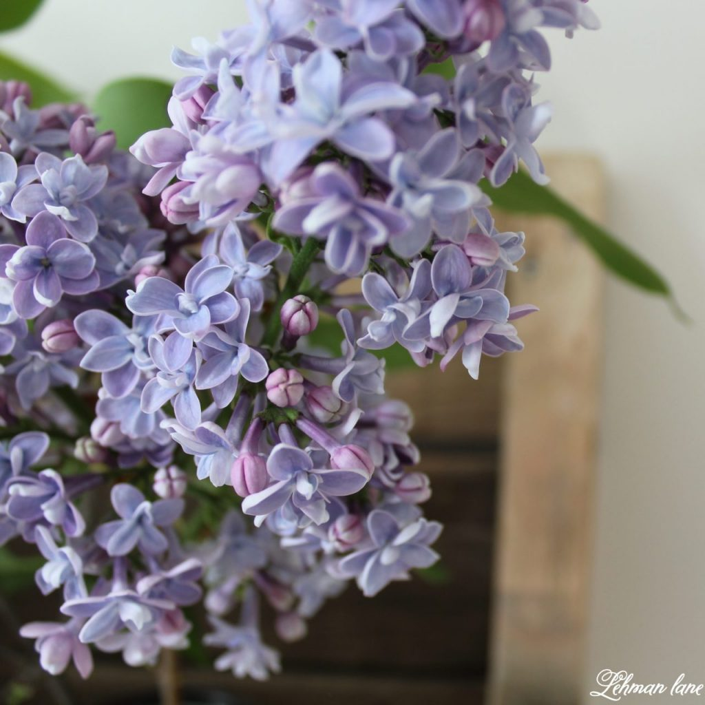 DIY Wood Pallet Shelf for Flowers - lilac flowers