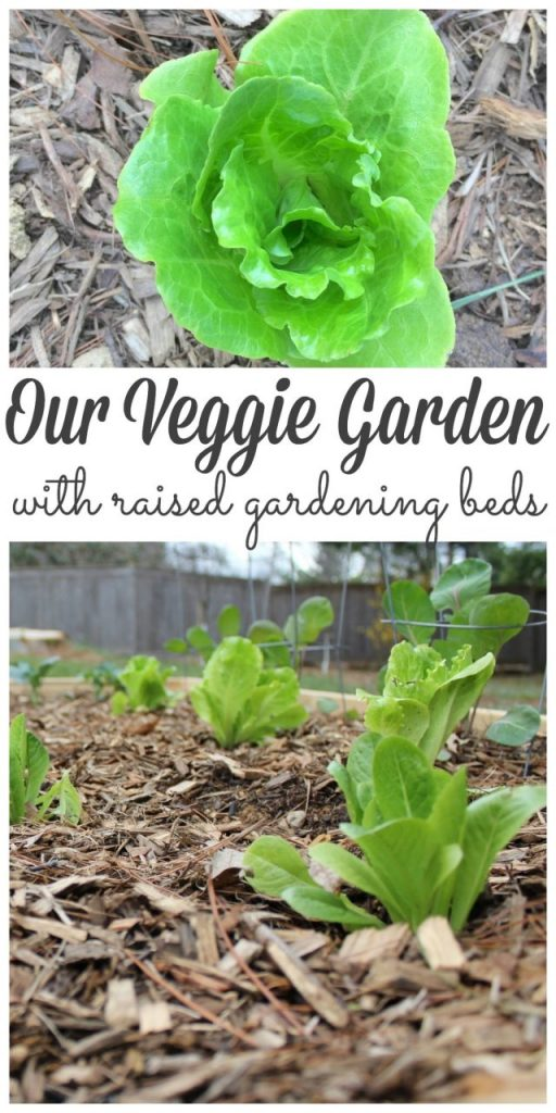 We finally have a veggie garden for our old farmhouse! Stop by and see how we made it. #veggies #veggiegarden #raisedbeds #gardening http://lehmanlane.net