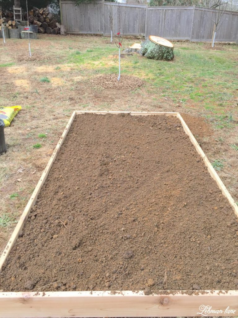 Our New Veggie Garden - raised beds with leveled dirt