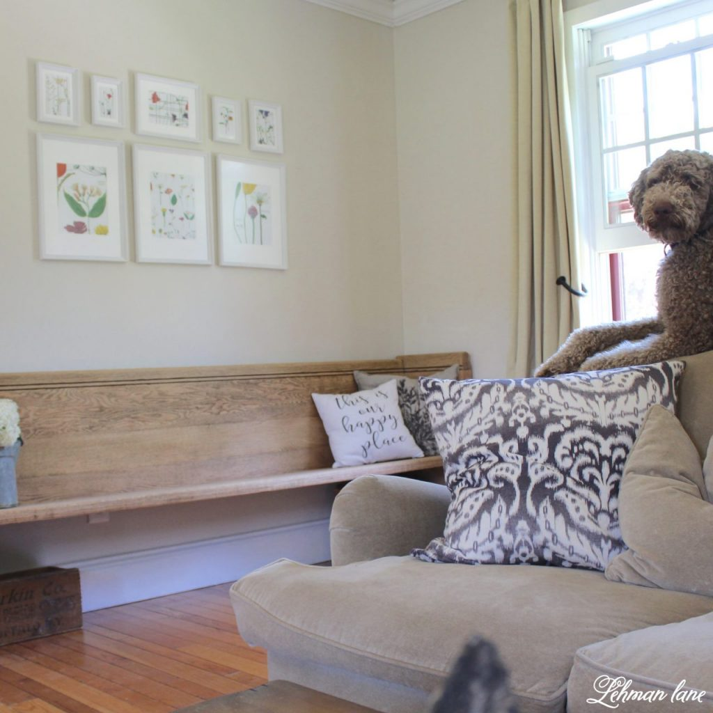 Church Pew Makoever labradoodle on the sofa