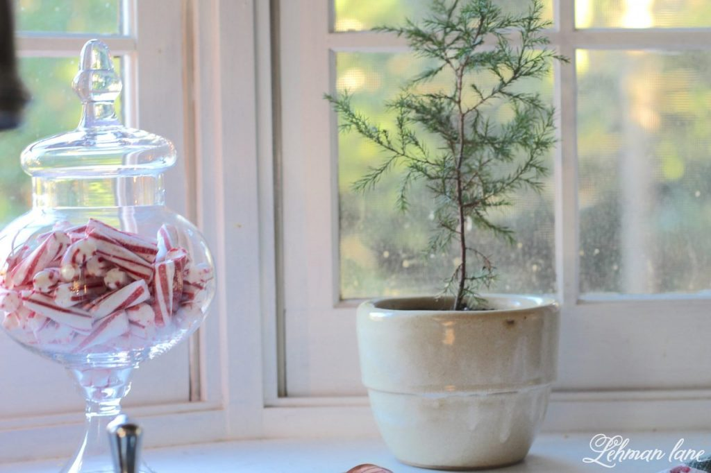 Christmas Home Tour - peppermints and an evergreen