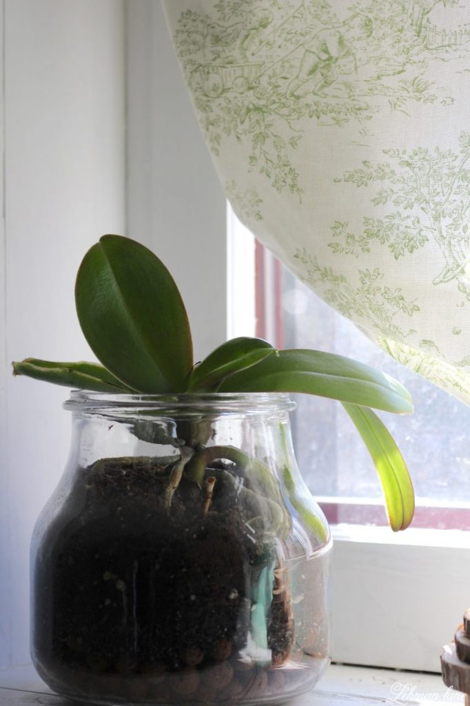 DIY Balloon Shade - bathroom window, orchid