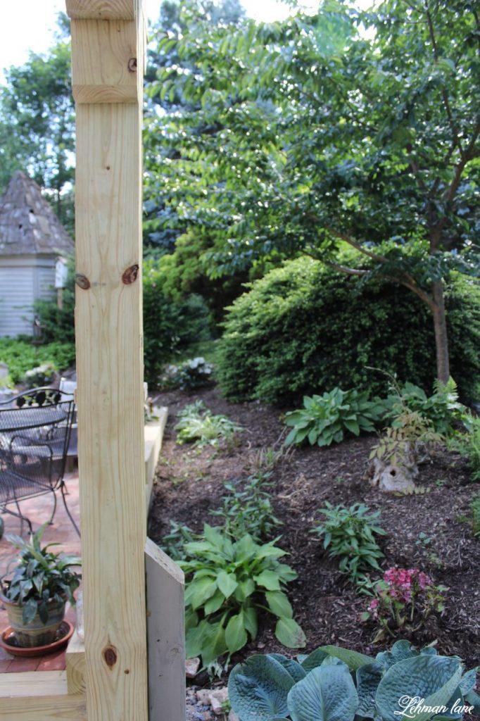 Our New Patio Garden - yoshino cherry tree