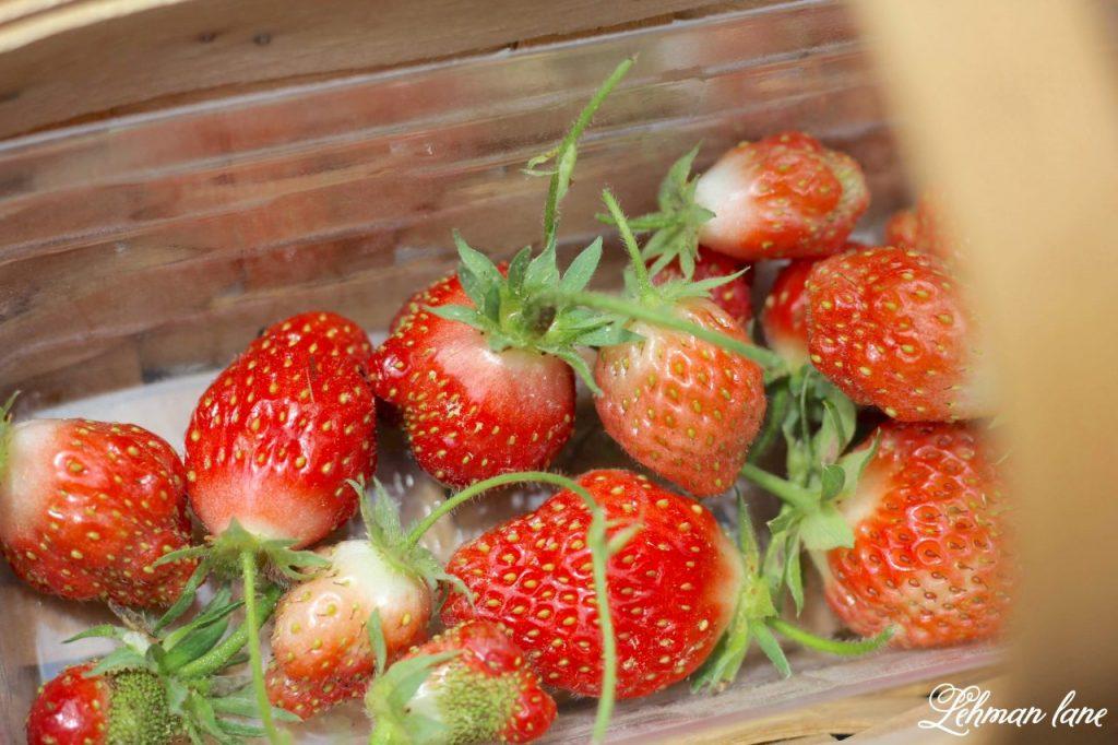 Summer Porch & Garden Tour - strawberries