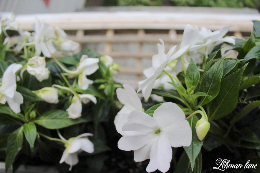 Summer Porch & Garden Tours - window box with impatiens