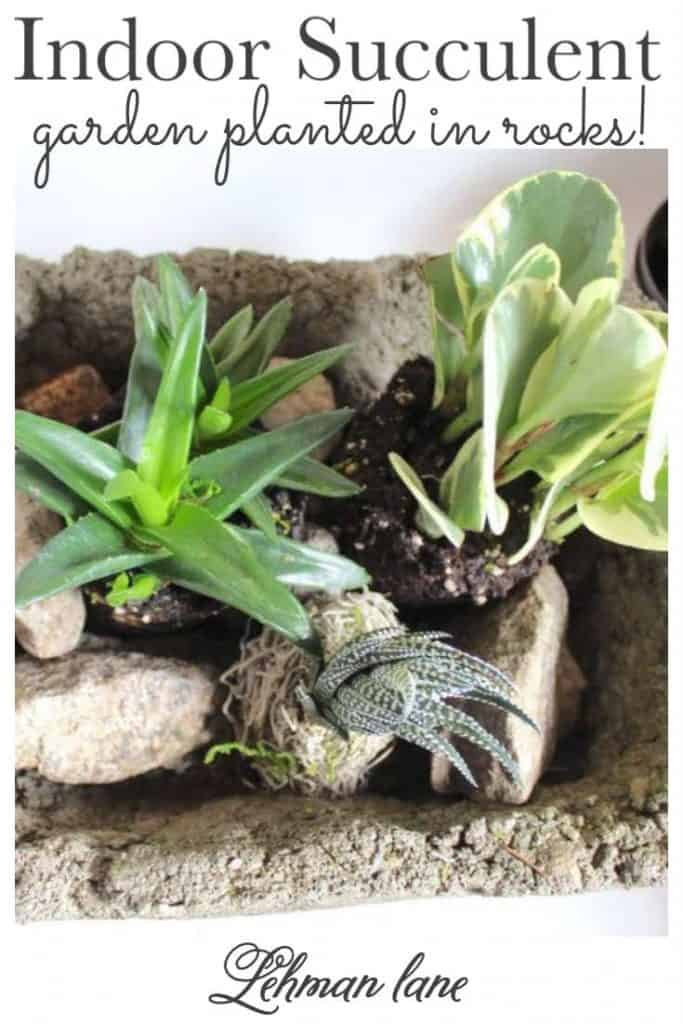 Sharing my tips & tricks for how to plant an easy & AWESOME DIY indoor succulent garden ideas in rocks planted in a stone trough with where to buy succulents & how to care tips with step by step instructions & pictures! #inddorsucculentgarden #succulents #gardeningindoors #gardeningforbeginners https://lehmanlane.net