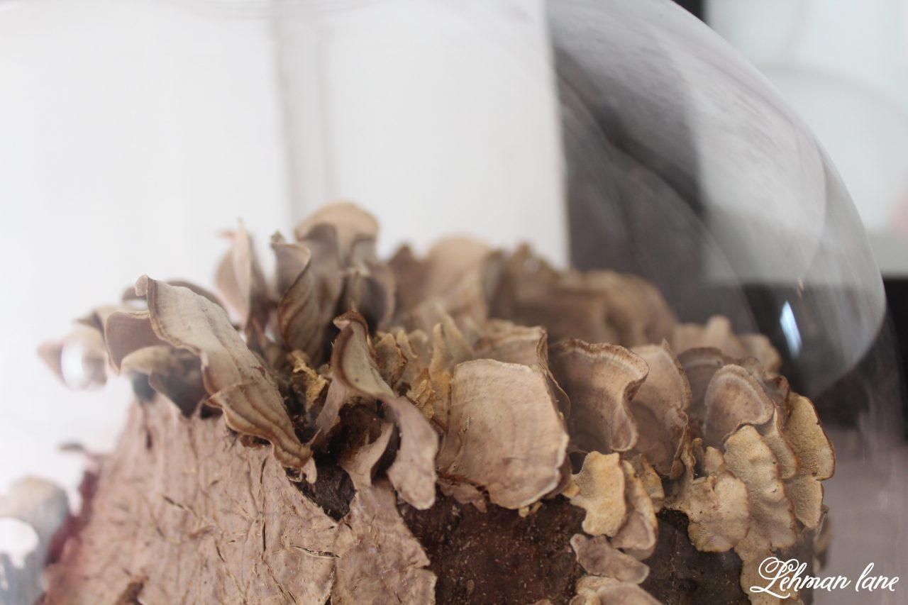 mushroom log cloche