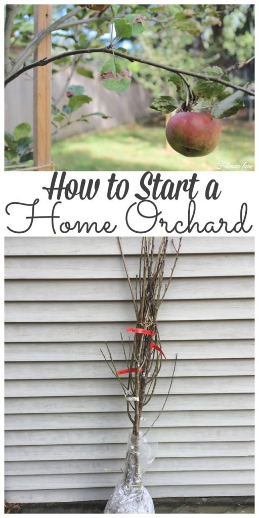 It has always been a dream to havea home orchard. Stop by to see how we started ours! #orchard #homeorchard #homegrown http://lehmanlane.net