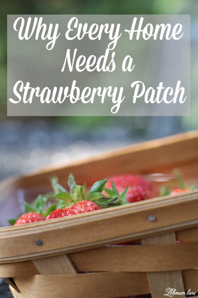 Home Garden Strawberry Patch - every home garden needs a strawberry patch. Strawberries are easy to grow & care free plants #homegarden #strawberries http://lehmanlane.net