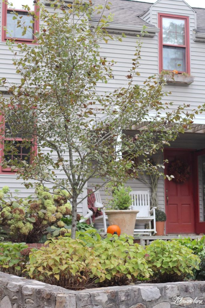 Autumn Front Porch - I never tire of decorating our Farmhouse for the many seasons we enjoy here in Pa.  Today, I am sharing our autumn porch decked out for the cool Fall weather soon to come. #autumn #fallfarmhouse #fallporch #autumnporch https://lehmanlane.net