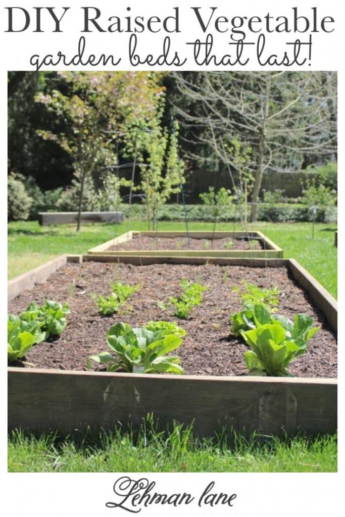 Sharing all our tips & tricks for how to build the best DIY Raised Vegetable Garden Beds that last for your home garden on a budget with step by step instructions. #gardeningtips #raisedvegetablebeds #gardening https://lehmanlane.net
