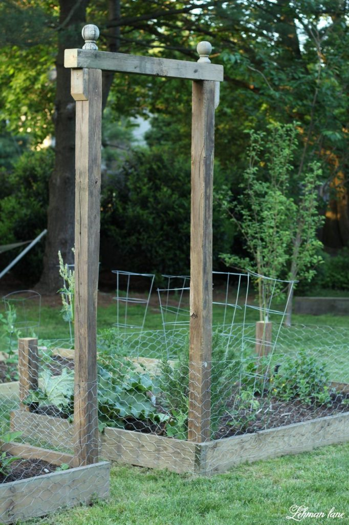 We added a DIY Arbor & wire fencing to our raised garden beds.  This DIY arbor was simple to build & brings a lot of character to our raised garden beds while the fencing helps keeps our chickens away from eating all the strawberries...And this project cost us less than $20 to build! #diyarbor #arbor #raisedgardenbeds #potagergarden https://lehmanlane.net