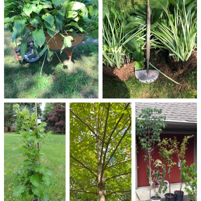 If you've been wanting to change your landscape but don't want to spend a lot of money here are 5 ideas for how to get trees, shrubs, plants & flowers on a budget or for FREE! Perfect for anyone who is gardening on a budget! #gardening #gardeningtips #gardeningonabudget https://lehmanlane.net