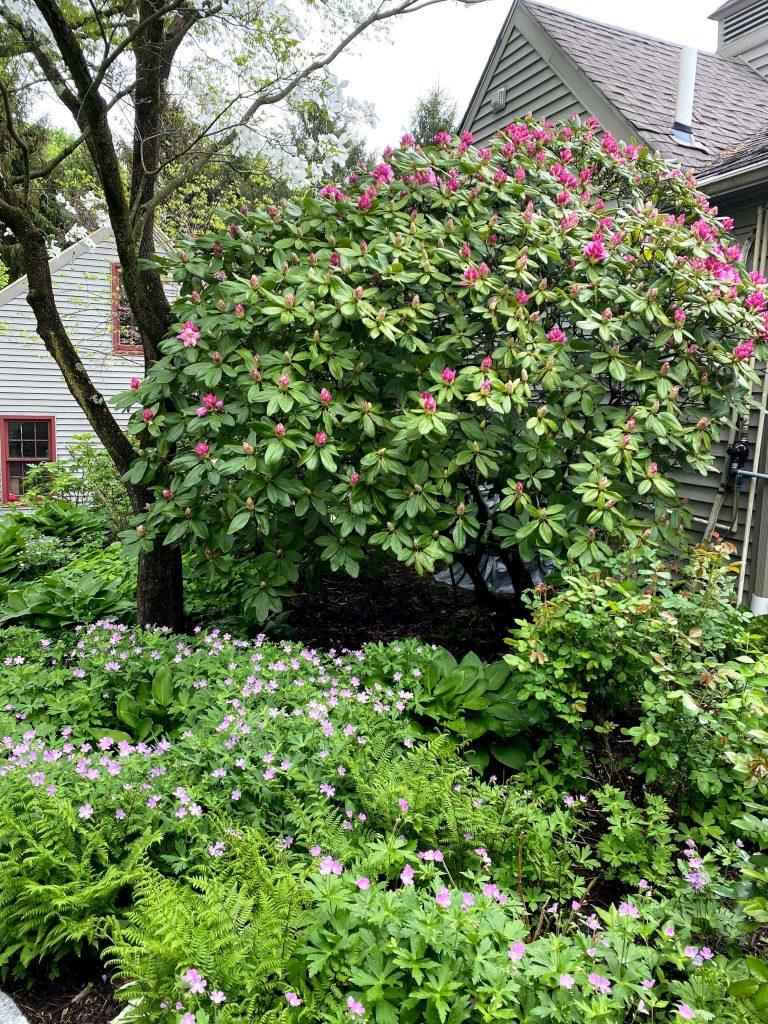 Sharing a tour of our Farmhouse's spring garden, my favorite spring plants & gardening ideas with pictures. #springgarden #gardentour https://lehmanlane.net